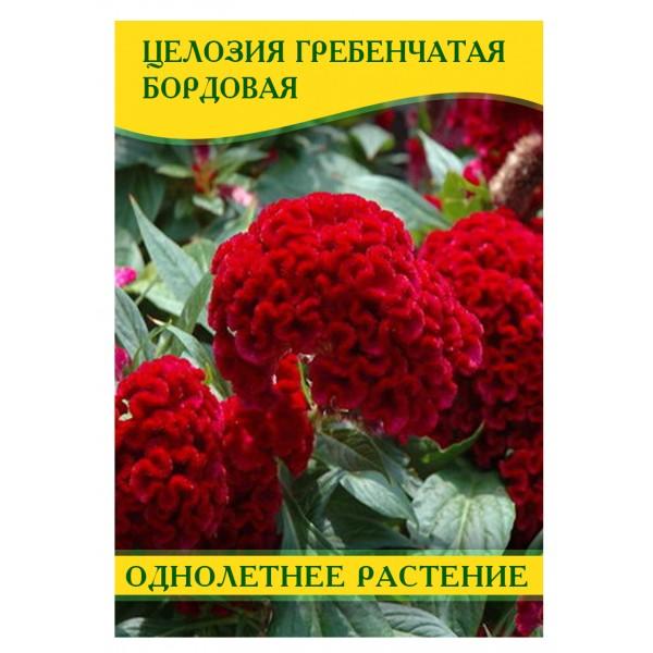 Насіння квітів Целозія гребінчаста бордова, 50г