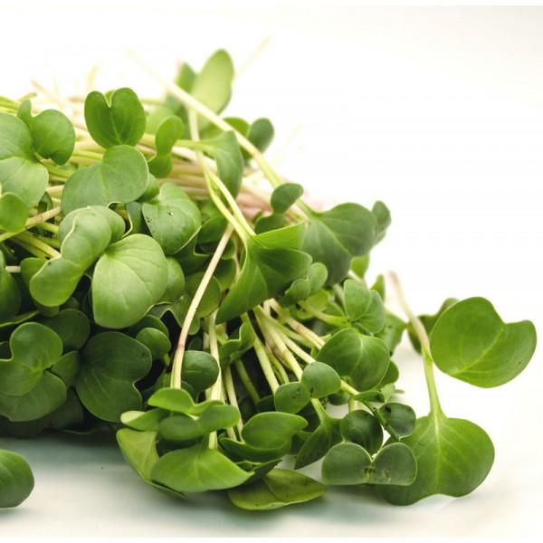 Насіння мікрозелень Редис, 0,1 кг