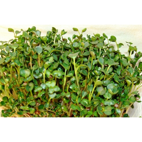 Семена микрозелень Руккола, 0,1кг