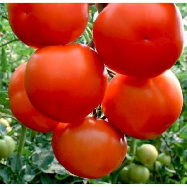Насіння томату Лилос F1, 100шт.
