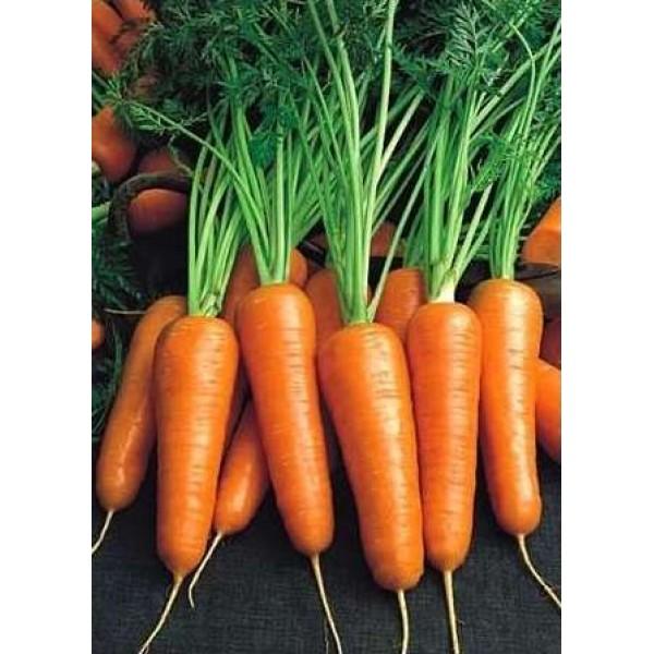 Насіння моркви Роял Шансон, 500 гр., банка