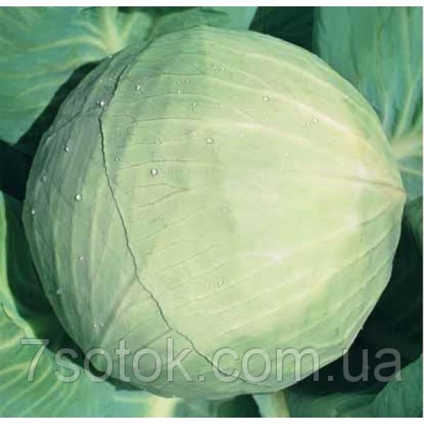 Семена капусты Белоснежка, 100г