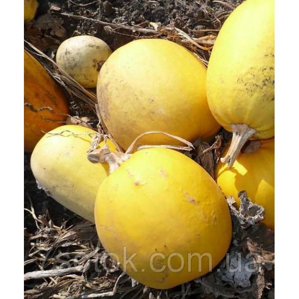 Насіння гарбуза Болгарка (Дамський ніготь) на насіння, 0,5 кг