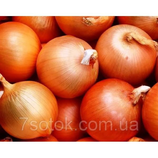 Насіння Цибулі Разгуляй, (Росія), 0,2 кг