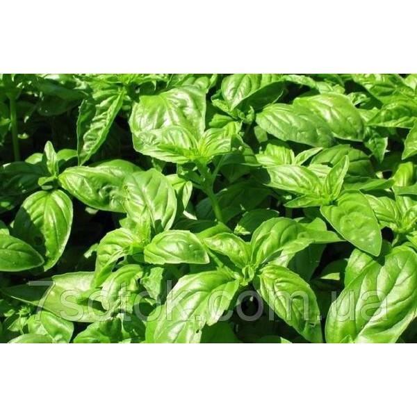 Семена Базилика Зеленый ароматный, 0,2 кг