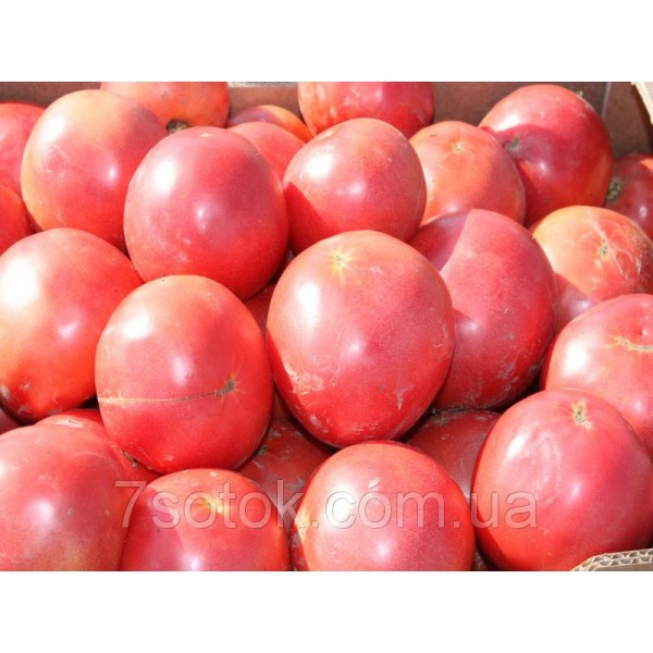 Насіння Томату Тарпан F1 рожевий, 1000 насіння