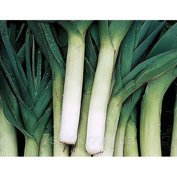 Семена лука Карантанский (порей), 0,5кг