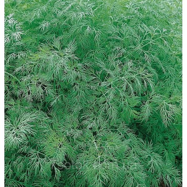 Насіння кропу Амброзія, 100г