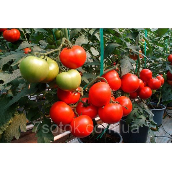 Насіння Томату Топкапі F1, 1000 насіння