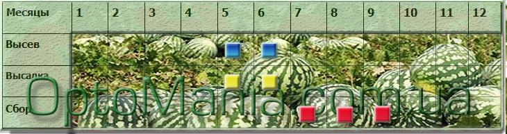 Высев-сбор арбуза