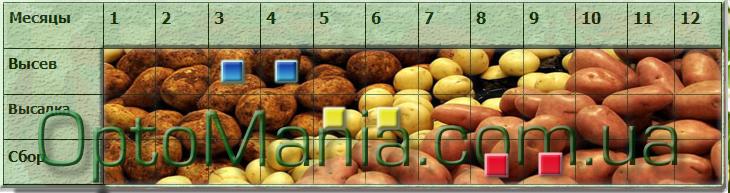 Высев ― сбор картофеля