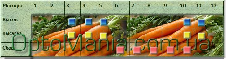 висів збір насіння моркви