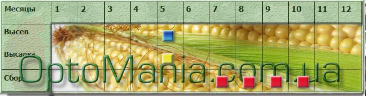 Посів - збір кукурудзи