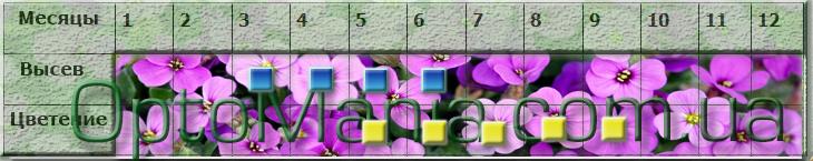 посів квітів