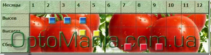 Высев ― сбор томатов